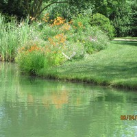 Photo Thumbnail #4: our pond