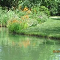 Photo Thumbnail #4: our pond