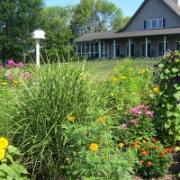 Photo Thumbnail #1: My old fashioned cottage garden