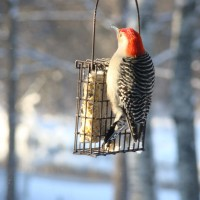 Photo Thumbnail #11: Woodpecker