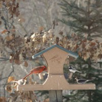 Photo Thumbnail #4: Male Cardinal, Chickadee, Junco, Sparrow