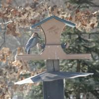 Photo Thumbnail #10: Woodpecker