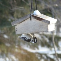 Photo Thumbnail #6: This is a new suet feeder, the suet is on the...