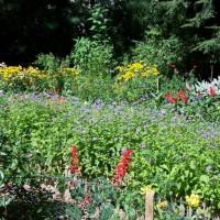 Photo Thumbnail #11: Sunny Garden