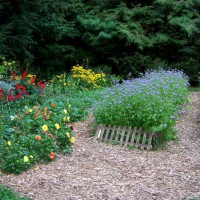 Photo Thumbnail #1: Mulch paths with ageratum