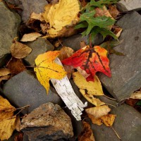 Photo Thumbnail #22: Bird pond rocks and autumn leaves, October 2009