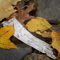 Photo Thumbnail #5: Autumn leaves