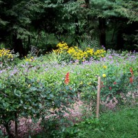 Photo Thumbnail #3: Garden from cat corral, with honeysuckle on the...