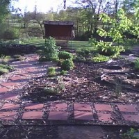 Photo Thumbnail #3: Spring 2009,I have periwinkle,creeping phlox...