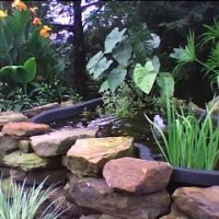 Photo Thumbnail #2: Garden Pond-Fall 2008