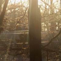 Photo Thumbnail #6: We live on a farm and have lots of trees around...