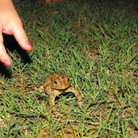 Photo Thumbnail #21: MY LITTLE GIRL FOUND ONE OF OUR AMPHIBIAN FRIENDS