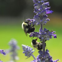 Photo Thumbnail #11: WORK IT BEES