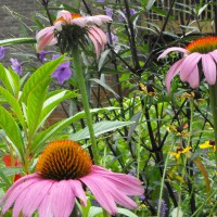 Photo Thumbnail #6: BUTTERFLY GARDEN