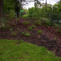 Photo Thumbnail #11: Side yard begins to turn green as hydrangeas...