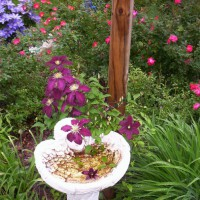 Photo Thumbnail #4: Clematis take over angel birdbath.