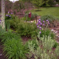 Photo Thumbnail #8: Ditch garden begins to bloom with color as Iris...