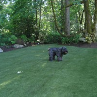 Photo Thumbnail #18: Turf install completed in backyard