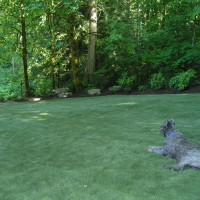 Photo Thumbnail #20: Center of artificial turf in backyard