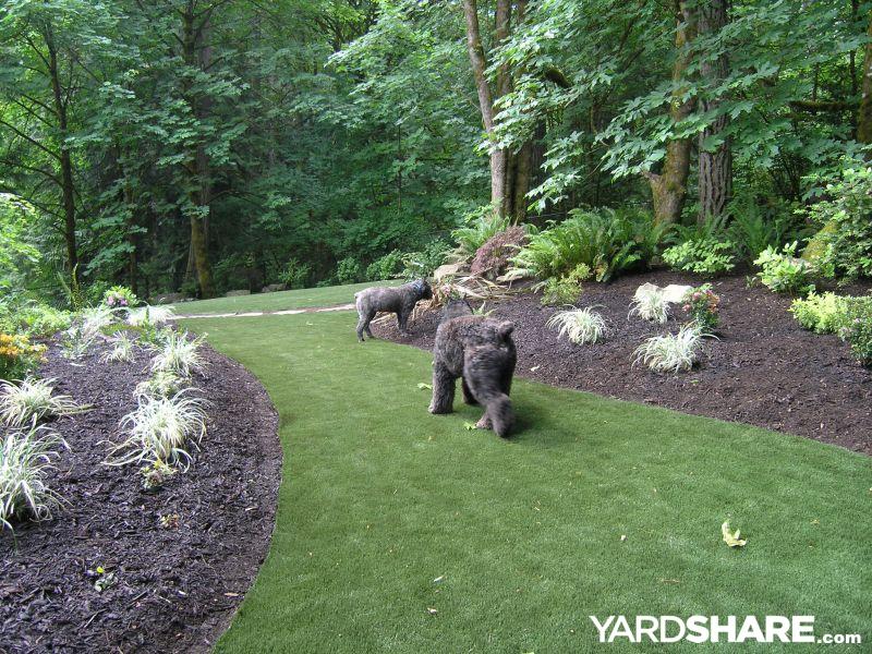 Landscaping Ideas Gt Woodland Wonderland Yardshare Com