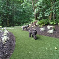 Photo Thumbnail #24: Backyard turf and landscape