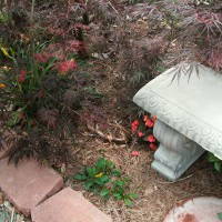 Photo Thumbnail #8: Meditation bench surrounded by Red Waxleaf...