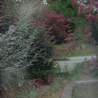 Photo Thumbnail #12: View from east sideyard gate facing toward...