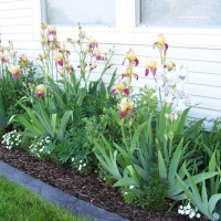 Photo Thumbnail #1: Side yard planter facing west I put in last year