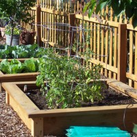 Photo Thumbnail #24: Raised beds