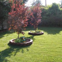 Photo Thumbnail #3: Two Japanese Plumb trees add some color to the...