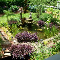 Photo Thumbnail #1: my gold fish pond 2009