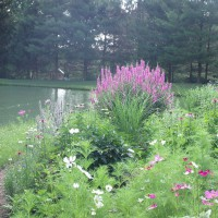 Photo Thumbnail #2: Front yard, cottage garden