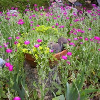 Photo Thumbnail #13: Pinks surround a tree we cut down to provide...