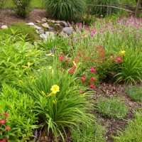 Photo Thumbnail #10: Drainage ditch garden in back yard, ditch runs...