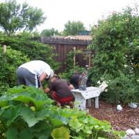 Photo Thumbnail #5: Picking berries