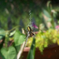 Photo Thumbnail #28: Garden resident.