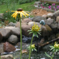 Photo Thumbnail #1: The yellow contrast against the rocks is so...