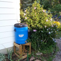 Photo Thumbnail #26: All the rain barrels are covered with a fine...