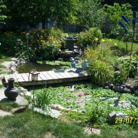 Photo Thumbnail #2: Larger pond in back yard