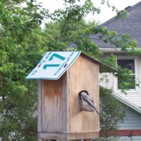 Photo Thumbnail #9: Come spring, the chickadees are the first to...