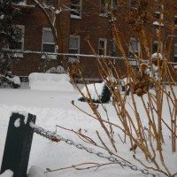 Photo Thumbnail #1: First snow of winter 2010/2011