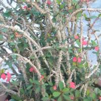 Photo Thumbnail #5: sideyard , a cactus