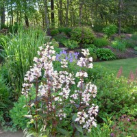 Photo Thumbnail #6: Looking over the patio garden to the hill --...