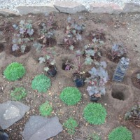Photo Thumbnail #10: September 9, 2009.  I\'m adding Heuchera...