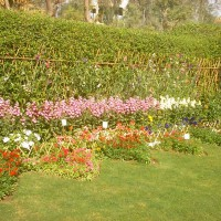 Photo Thumbnail #1: Its my yard in spring in Multan, Pakistan