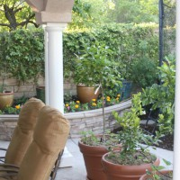 Photo Thumbnail #4: Kitchen garden- 3 citrus in pots and tomatoes...