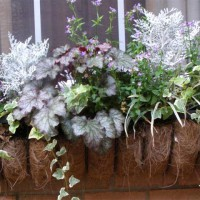 Photo Thumbnail #14: I love window boxes and container gardening...