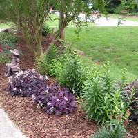 Photo Thumbnail #16: Side yard starting to bloom