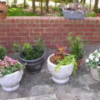 Photo Thumbnail #10: Pots of flowers