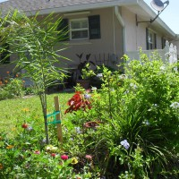 Photo Thumbnail #9: Flower bed in back - newly planted queen palm,...